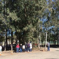 Gum tree identification activity