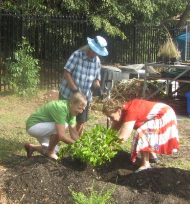 Planting a tree in recognition of the nursery celebration day