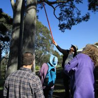 Kooroora Bay Landcare - monitoring nest boxes